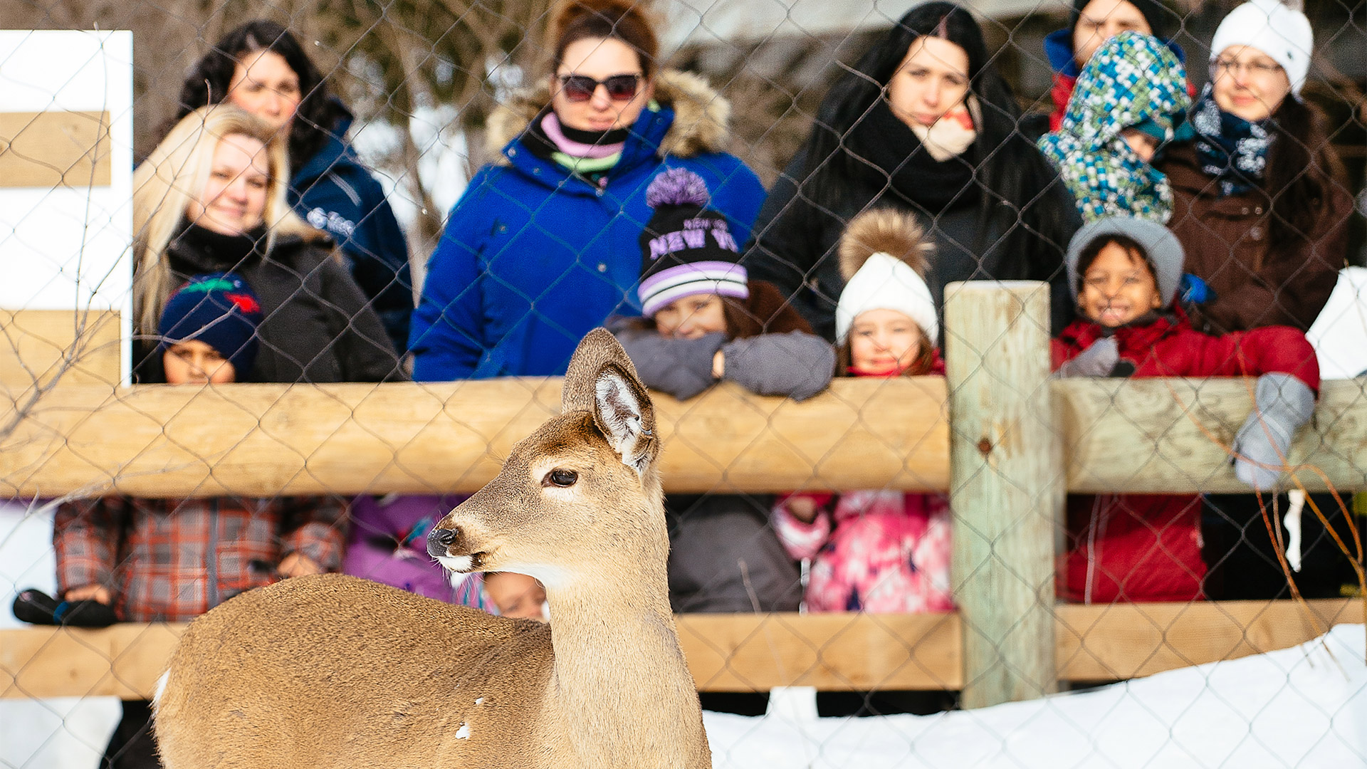 Ecomuseum Zoo visitors looking at a deer