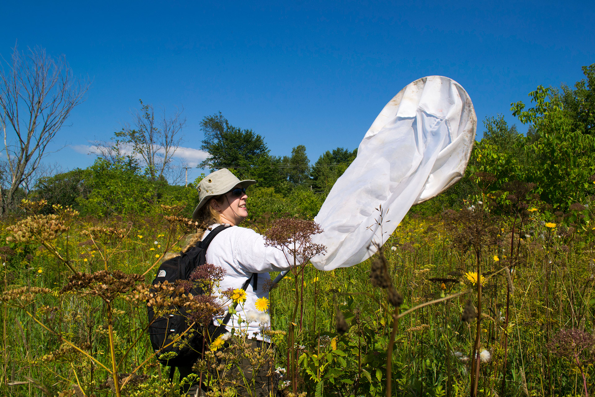 person in a field holding an insect net