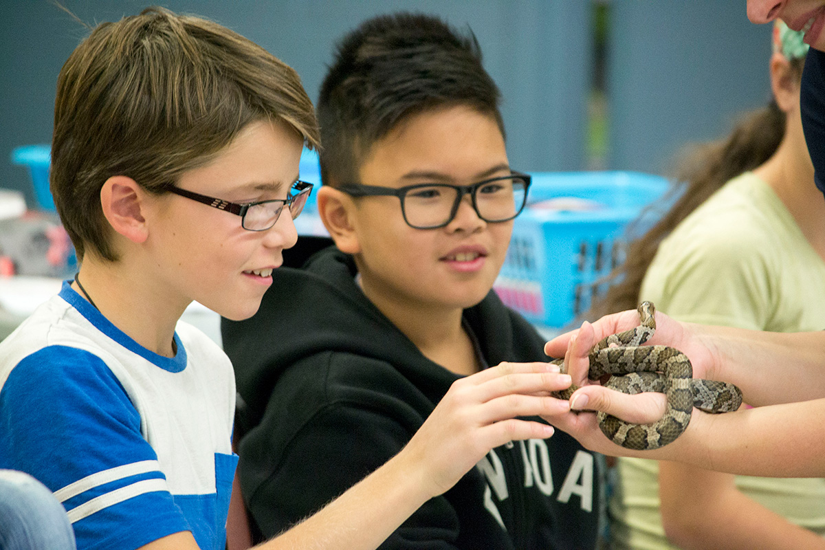 students touching a snake during a classroom presentation on Quebec's endangered species by one of Ecomuseum Zoo's zookeeper