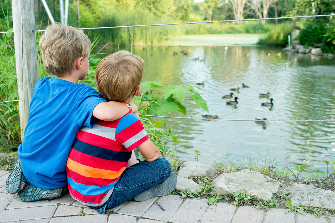 two little boys looking at ducks and ducklings in a pond at the Ecomuseum Zoo