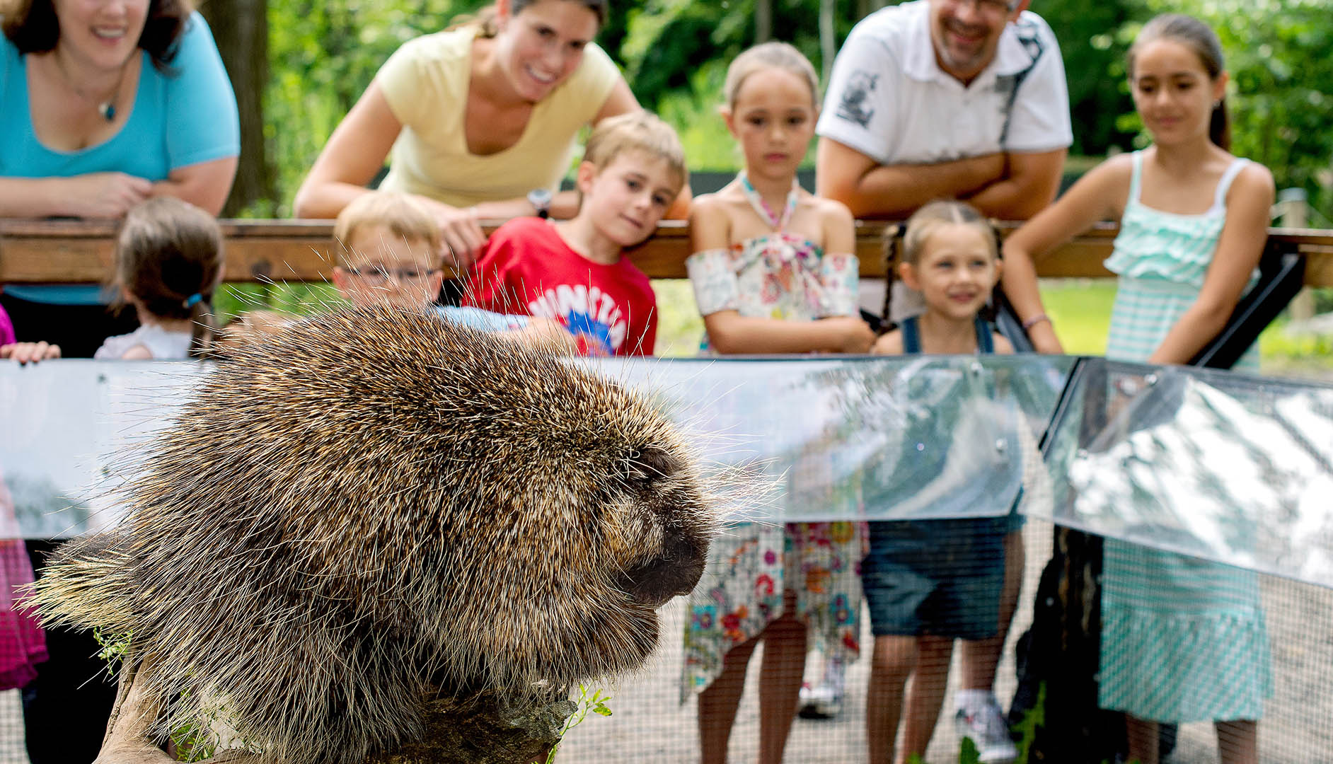 porcupine and visitors