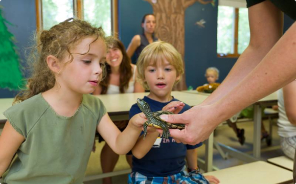 kids touching a turtle